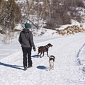 The North Basin Trails are a great place for dogs on leash, and they are only 20 minutes from Salt Lake.- Salt Lake City Inversion Survival Kit
