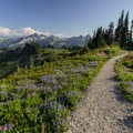 The Skyline Trail lined with wildflowers with the Tatoosh Range in the distance.- Mount Rainier National Park