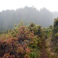 Along the Hosmer Grove Trail, look for signs identifying the various trees and shrubs.- Haleakalā National Park