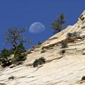 Trans-Zion Trek, Zion National Park.- Springdale, UT: A Premier Destination Location