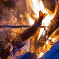 Cooking up the catch of the day.- California's Best Lake Camping