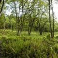 Oak restoration area along the West Ridge Trail in Mount Talbert Nature Park.- Exploring Oregon Watersheds: Adventure Brews