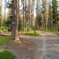 Lost Creek Campground.- Camping Near Crater Lake National Park