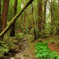 Muir Woods National Monument.- The Stately Serenity of Old-growth Forests