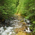 North Fork Cispus River near North Fork Campground.- A Guide To Camping in Washington