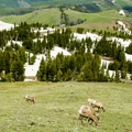 Panoramic views and wildlife visiting Dunraven Pass.- Mount Washburn via Dunraven Pass