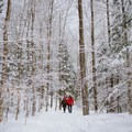 The hike up Willard Mountain offers the whole family a chance to experience New Hampshire's winter woods.- 12 Must-Do Winter Adventures in New England