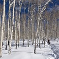 Snowshoeing the Willow Heights Trail.- Snowventure