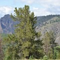 From Phoenix Parkway you can see the yurt on top of the ridge.- Phoenix Ridge Backcountry Yurt