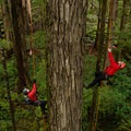 Brian and Damien on their ascent of a Douglas fir. Photo by Paul Colangelo.- Ascending the Giants is on a Mission to Catalog Our Forests' Champion Trees