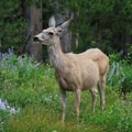 National Forests provide wildlife with excellent homes of varying climates and sizes.- Five Reasons Wildlife Appreciate National Forests