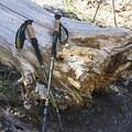 Mountainsmith's Carbonlite Pro Trekking Poles.- Gear Review: Mountainsmith's Carbonlite Pro Trekking Poles