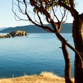 A Pacific madrone protects the views out over the San Juan Islands.- 50 of Washington's Best Sea Kayaking Adventures