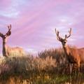 Mule deer in Central Montana's Big Sky country. Photo courtesy of Central Montana.- Central Montana: Best Wildlife Experiences in the West