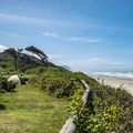 Beachside campsite at Tillicum Beach Campground.- A Guide to Camping in Oregon