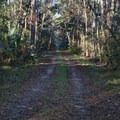 Service road from the entry on Wakulla Beach road.- Cathedral of Palms Trail