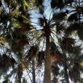 Cathedral of Palms Trail
