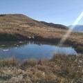 Ruby Valley Hot Springs