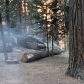 Deer!- Azalea Campground