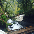 The creek is running pretty high right now- Wahkeena Falls/Multnomah Falls Loop Hike