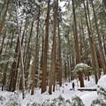 Snoquera Falls Loop Trail in the Winter- Snoquera Falls Loop