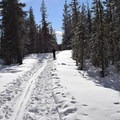 Ski trail (right) and snowshoe trail (left)- South Loop Spur Trail