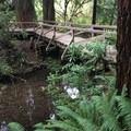 cool bridge- James Irvine Trail, Prairie Creek to Fern Canyon