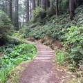 nice bend in the trail- James Irvine Trail, Prairie Creek to Fern Canyon