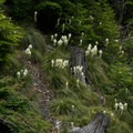 Beargrass down in the canyon from Tidbits Creek Rd- Tidbits Mountain