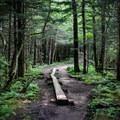 Andrews Bald Trail - Andrews Bald