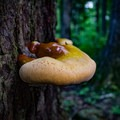 The Rainbow Falls trail is lush and full of life, including many types of fungi. - Rainbow Falls Trail via LeConte Creek