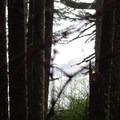 Tillamook Head Hike