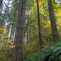 Sun shining through the trees in Silver Falls State Park. - Silver Falls, Trail of 10 Falls