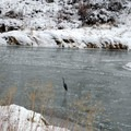 Great Blue Heron in Smith Rock State Park.- Smith Rock, River Trail Hike