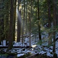 Sun shining through the trees along the trail out to Blue Pool. - McKenzie River Trail