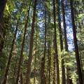 Along the McKenzie River Trail.- McKenzie River Trail