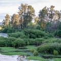 Delta Ponds at dusk.- Delta Ponds