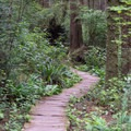 Wooden trial on the Ozette Loop in Olympic National Park.- Ozette Triangle Loop Trail
