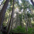 Trail to Marymere Falls in Olympic National Park.- Marymere Falls Hike