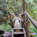 Foot bridge to Marymere Falls.- Marymere Falls Hike
