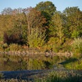 Delta Ponds. - Delta Ponds