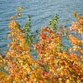 Fall leaves around Suttle Lake.- Suttle Lake Loop