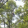 Central American Spider Monkey- Mistico Arenal Hanging Bridges Park