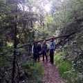 a few obstacles along the way- South Yuba River Trail