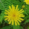 Flower- Hamilton Mountain Hike