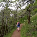 Beautiful Tree-Lined Trail- Dog Mountain Hiking Loop