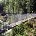 Suspension Bridge!!!- Lava Canyon