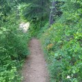 Heading up Augspurger Trail - Augspurger Mountain