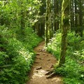 Beautiful Trail!!!- Saddle Mountain