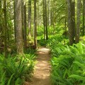 Lush Fern-Lined Trail!!!- Siouxon Creek Hike